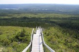 moose-barrens-to-corner-brook-trail-stairs20110820_21