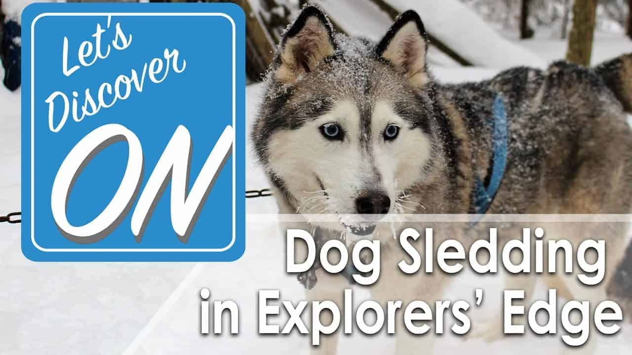 Let's Discover ON - Dog Sledding in Explorers' Edge